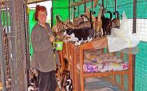 Belediye kapandı, barınakta hayvanlar sahipsiz kaldı